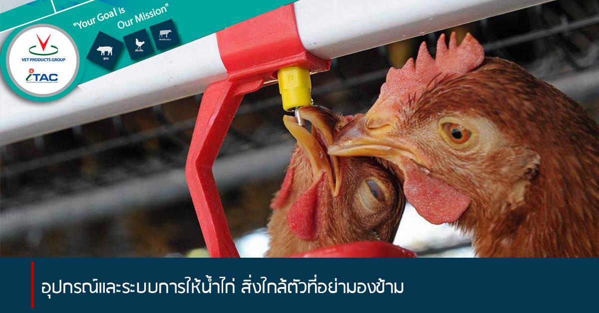 อุปกรณ์และระบบการให้น้ำไก่ สิ่งใกล้ตัวที่อย่ามองข้าม