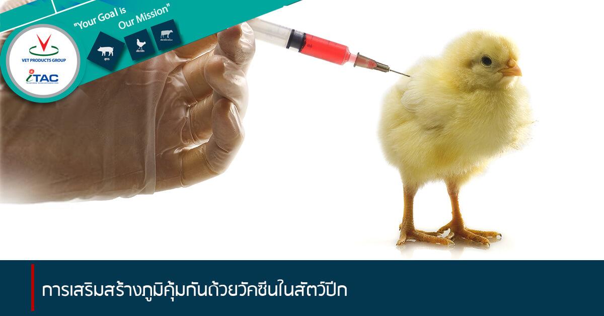 การเสริมสร้างภูมิคุ้มกันด้วยวัคซีนในสัตว์ปีก