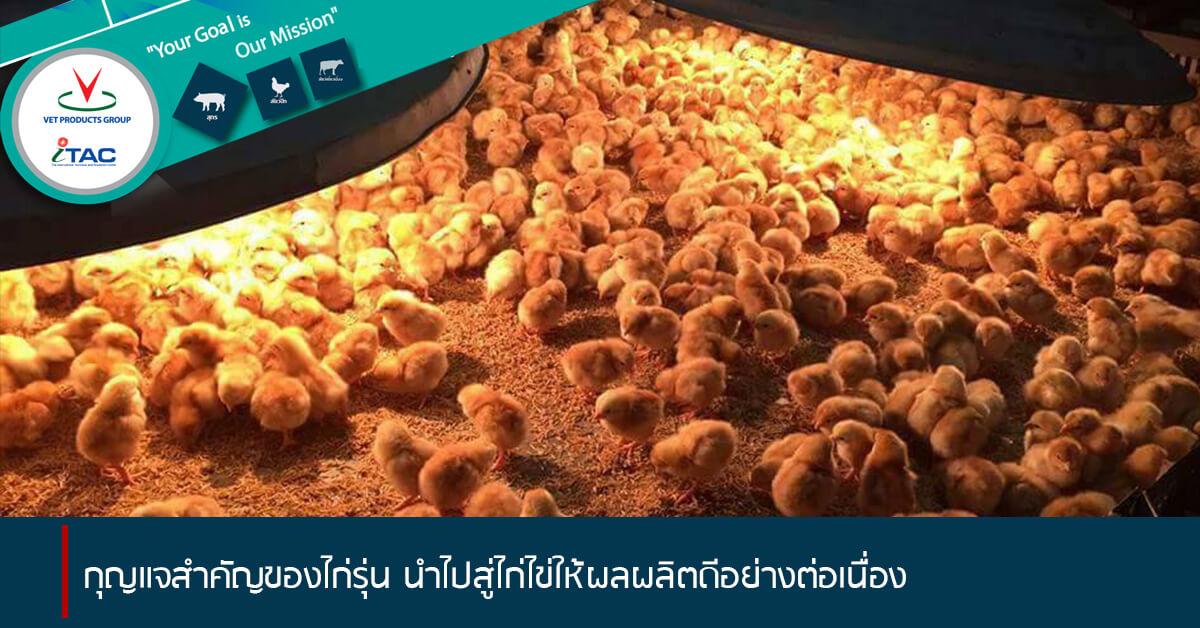 5 กุญแจสำคัญของไก่รุ่น นำไปสู่ไก่ไข่ให้ผลผลิตดีอย่างต่อเนื่อง