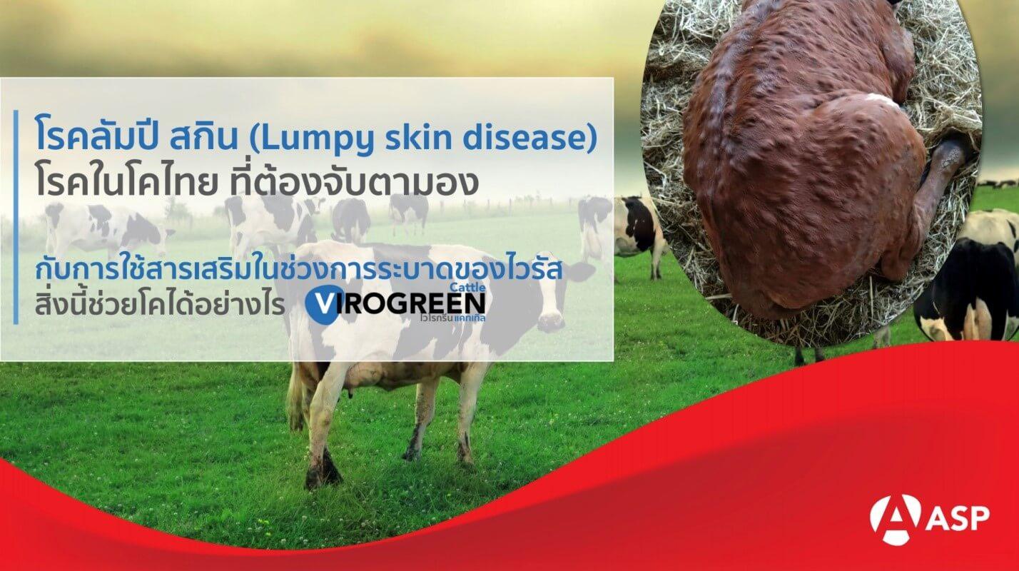 Lumpy skin disease (LSD หรือ โรคลัมปี สกิน) โรคในโคไทย ที่ต้องจับตามอง