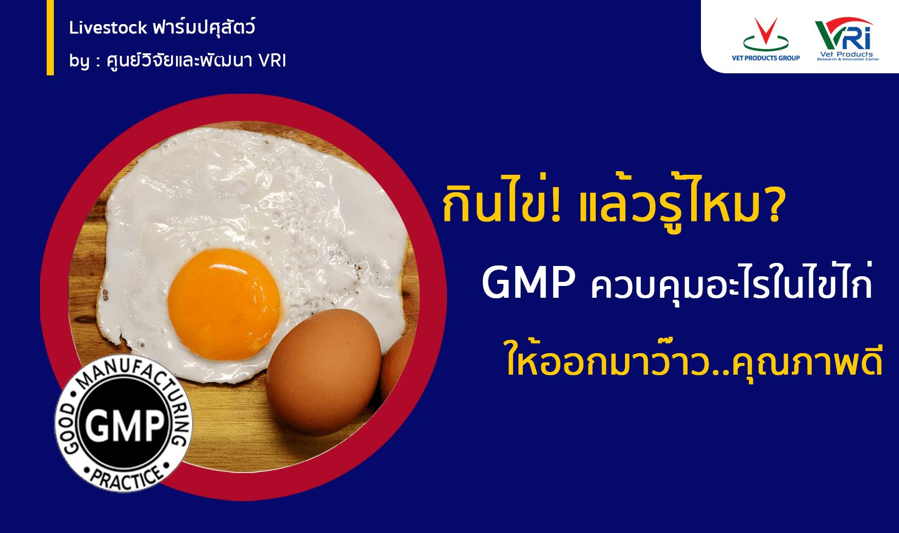 กินไข่! แล้วรู้ไหม? GMP ควบคุมอะไรในไข่ไก่ ให้ออกมาว๊าว..คุณภาพดี